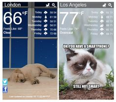 weather kitty and weather puppy app | cool mom tech