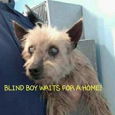 "2/12/17-""BUDDY""- ON DEATH ROW- WAITS EAGERLY AS PEOPLE GO BY HIS CAGE, BUT NO ONE STOPS- A SWEET, MALTESE,TERRIER MIX, NEUTERED BOY- PLEASE HELP HIM- HE IS AFRAID OF HIS SURROUNDINGS - ID#A4418877- LOS ANGELES COUNTY ANIMAL CARE AND CONTROL, BALDWIN PARK, BALDWIN PARK, CALIFORNIA CALL (626)-962-3577- awos.petfinder.com/shelter"