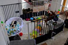 Für den Welpenspielplatz draußen ist es definitiv noch zu früh. Also haben wir eine kleinen Bereich innen mit Babygittern abgetrennt, die große Wurfkiste raus, eine kleine Hundeschale gut gepolstert rein und viel Plüschspielzeug. Jetzt geht es an's Entdecken des kleinen Indoor-Welpenspielplatz. Für erste Geräuschgewöhnung sind auch unsere Ketten, CDs und Bälle wieder an den Gittern befestigt.