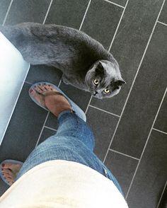 Mummy, give me the food! Hurry up! I'm hungry! 😼 #grumpy #little #girl #grumpycat #hungry #food #now #cat #instacat #cats #catsagram #catstagram #catsoninstagram #catsofinstagram #meow #meowbox #fluffy #fluffypack #awhanimals #kitty #neko #britishshorthair #scottishfold #pet #pets #petstagram #love