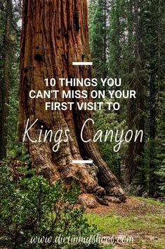 Kings Canyon National Park has so many great things to do, but if you have never been to the park, or if you are the one planning the vacation, it can be hard to know where to go and what to do. I've got you covered with this list of things you can't miss on your road trip. Check out these Kings Canyon travel tips and have a fun adventure! Fun Adventure, Greatest Adventure, Sequoia National Park, National Parks, Best Hikes, Amazing Adventures, Monuments, Where To Go, Trip Planning