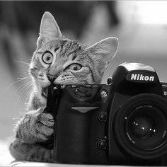 beau chaton mmmmmmmmmmmmm