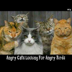 Angry cats looking for Angry Birds... Too funny!!!