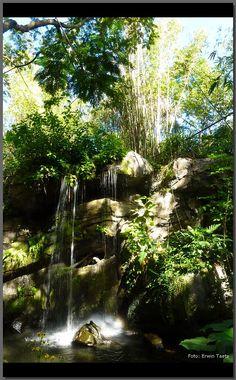 The Oasis in Disney's Animal Kingdom, Walt Disney World, Florida