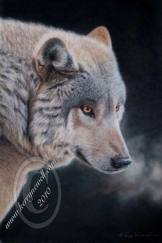 """'SILENT WITNESS' Timber Wolf Pastel on Velour 25"""" x 17"""" Original Available Limited Edition Prints Available © Kerry Newell All rights reserved Website:  www.kerrynewell.com Twitter:  @KerryNewellArt Instagram:  @KerryNewellArt"""