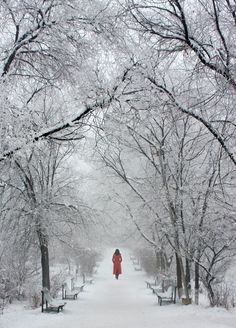 Yerevan, Armenia-Red in snow Photo by Ali Doosti -- National Geographic Your Shot