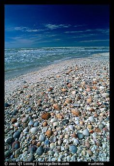 Sanibel Island, FL-beach covered with sea shells!