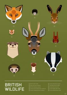 British Wildlife Poster Art Print