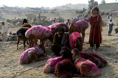 Un Afghan qui vend des moutons attend les clients sur un marché à l'approche de l'Aïd al-Adha, l'une des fêtes les plus importantes de l'Islam, qui a lieu lors du pèlerinage à la Mecque.