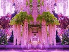 pink forest ireland - Google Search