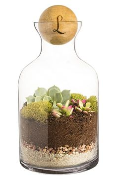 Free shipping and returns on Cathy's Concepts Monogram Glass Terrarium at Nordstrom.com. Add a natural, minimalist touch to your home or office with a glass terrarium perfect for housing succulents, ferns or small flowers.