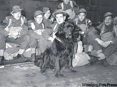 """October Infantrymen of """"C"""" Company, Royal Rifles of Canada, and their mascot en route to Hong Kong. Canadian Soldiers, Canadian Army, Dog Soldiers, Pearl Harbor, Navy Seals, Us Navy, Rifles, Hong Kong, Canada Vancouver"""
