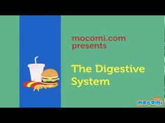 How does the Digestive System work? - Biology  for Kids. For more science stuff for kids, visit:  http://mocomi.com/learn/science/