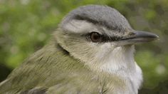 Gas plant in bird kill raided by Environment Canada An estimated 7,500 songbirds killed after flying into gas flare