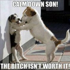 Calm Down Son  [ Funny Quotes ] #Funny #Quotes #Memes