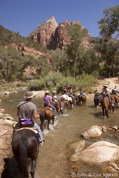 Mule Rides in the Grand Canyon