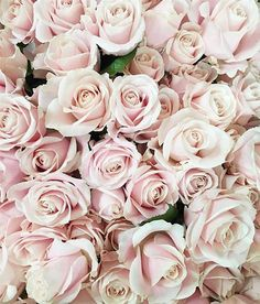 Surround yourself with roses!