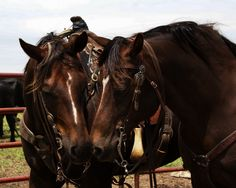 Ranch Farmgirl blog >> husband's horse, wife's horse ... sweethearts.