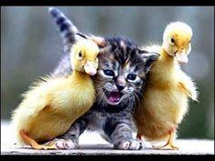 Chicks dig me!