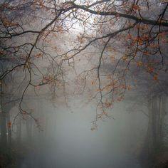 Nebbia che tutto copri, il mio amore non puoi oscurare. Eclissi di ogni tempo, la mia luna non potete eclissare.
