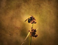 Title  Honeybee   Artist  Dan Sproul   Medium  Photograph - Photograph-digital Art