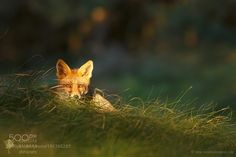 Watching the Watcher by RoeselienRaimond #animals #animal #pet #pets #animales #animallovers #photooftheday #amazing #picoftheday