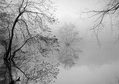Trees by MARK STEINMETZ
