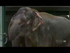 Elephants Reunited After 20 Years