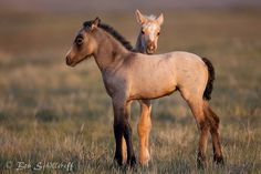 wild mustang foals Quarter Horses, All The Pretty Horses, Beautiful Horses, Large Animals, Animals And Pets, Wilde Mustangs, Horse Ranch, All About Horses, Majestic Horse