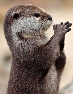 Baby Otter @abbyjolivette