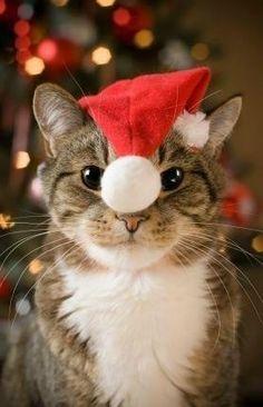 #Christmas cat http://www.lucalashes.com/