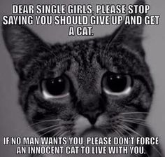 If no man wants you please don't force an innocent cat to live with you.