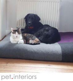 Hundekissen DIVAN Quattro auch als Katzenbett geeignet:-) Dog cushion DIVAN Quattro, also a cat bed:-) Letto per cane DIVAN Quattro, anche un letto gatto :-)