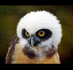 For you ...... because you love owls ! by Steve Wilson - need to up my game
