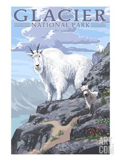 Mountain Goat and Kid - Glacier National Park, Montana Art Print by Lantern Press at Art.com