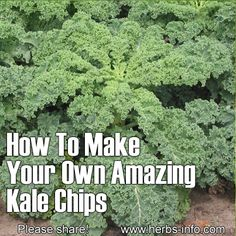 How To Make Your Own Amazing Kale Chips <3 Raw Food Recipes, Gluten Free Recipes, Kale Recipes, Low Carb Recipes, Vegetarian Recipes, Healthy Recipes, Cooking Recipes, Snack Recipes, Healthy Alternatives
