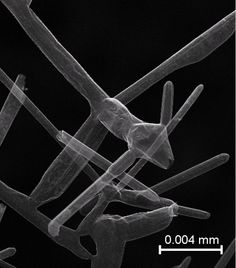 Aerographite becomes the lightest material ever produced