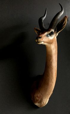 Recently stuffed head of a Gerenuk or Giraffe gazelle. The gerenu - Shouldermounts Stuffed head. Hunting trophy animals. Taxidermy - De Jachtkamer