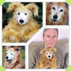 This is the lovely Amber who is no longer with us and was a much loved pet of Mary and Adrian's.  It was such an honour when Mary commissioned me to create a Burman Bear version of Amber for Adrian. Although  emotional she was a very special gift and loved by them both #dogs #amber #pets #lovedpets #dogcommissions #giftshops #thebestoflichfield #lichfieldshops #smallbusiness #