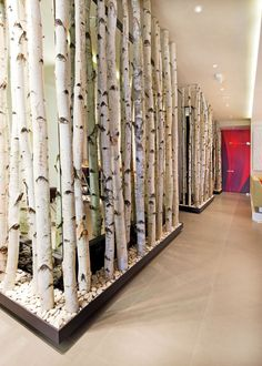 birch tree room dividers