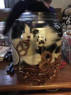 Funny cats - part 201 (40 pics + 10 gifs)