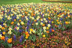 #LoveFlowers Gardens with beauty to behold: DALLAS ARBORETUM AND BOTANIC GARDENS USA @dallasarboretum @TripAdvisor