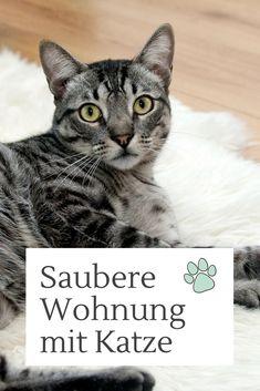 Entferne Katzenurin und Katzenhaare im Handumdrehen! #cat #home #reinigung #zuhause #katzen