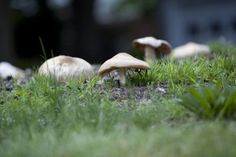 How to Stop Mushrooms From Growing in Your Grass