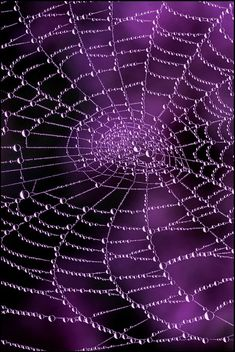 water drops on spider web Purple Love, Purple Lilac, All Things Purple, Shades Of Purple, Deep Purple, Purple And Black, Purple Stuff, Purple Swag, Purple Colors