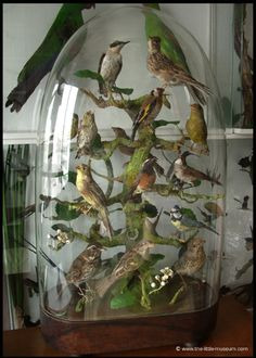 bird victorian dome - it would be pretty to do something like this with some of the Christmas bird ornaments I have collected....b