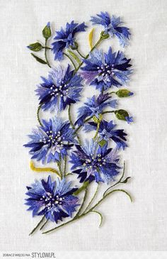 Cornflowers blue flower