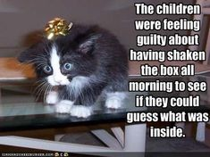 The children were feeling guilty about  having shaken the box all morning to see if they could guess what was inside.