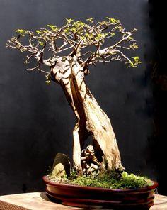Alguns dos meus trabalhos modelados, aramados e fotografados em 05 de setembro de 2010. 1- Pithecolobium torthum – 35 cm de altura / 45 cm de comprimento – Vaso oval feito em barro. 2-…