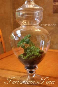 Everyday Art: How to plant a terrarium